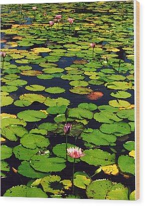 Wailea Water Lilies Wood Print by Jennifer Ott