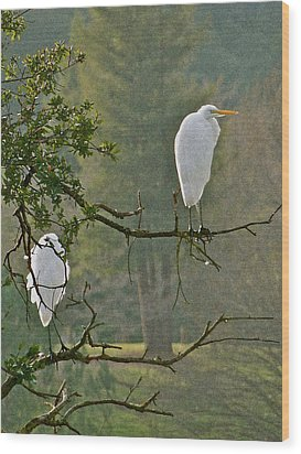 Waiting Egrets Wood Print