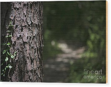 Wood Print featuring the photograph Walk In The Woods by Andrea Silies