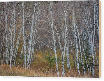 Wood Print featuring the photograph Walk In The Woods by James BO Insogna