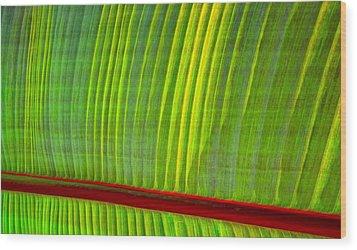 Walk The Line Wood Print by Gwyn Newcombe