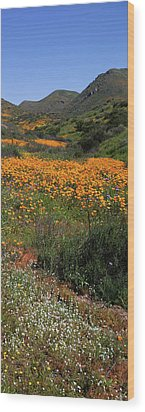 Wood Print featuring the photograph Walker Canyon Poppies by Cliff Wassmann