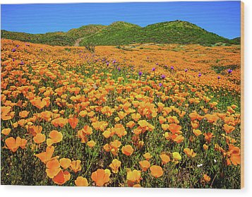 Walker Canyon Wildflowers Wood Print
