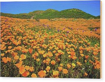 Walker Canyon Wildflowers Wood Print