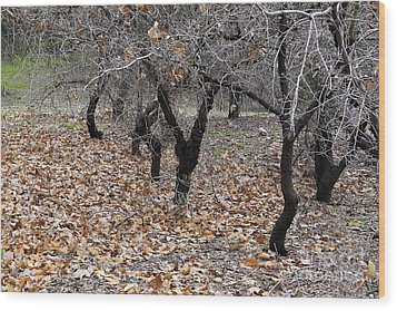 Wood Print featuring the photograph Walking Trees. by Viktor Savchenko