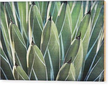 Wood Print featuring the photograph Wall Of Agave  by Saija Lehtonen
