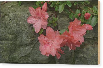 Wallflower Wood Print