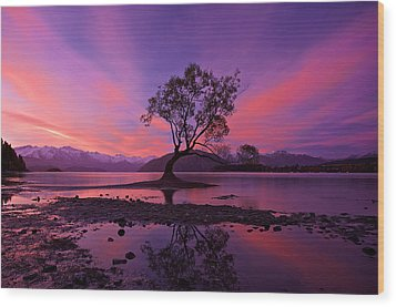 Wanaka Tree Wood Print