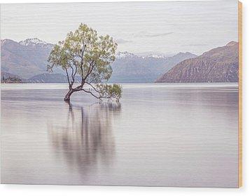 Wanaka Tree Wood Print by Racheal Christian