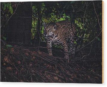 Wood Print featuring the photograph Wandering Jaguar by Wade Aiken