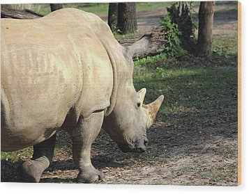 Wandering Rhino Wood Print by Mary Haber