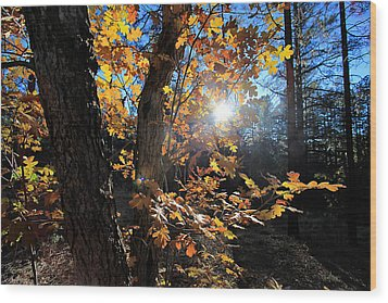 Wood Print featuring the photograph Waning Autumn by Gary Kaylor
