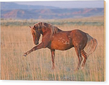 War Horse Wood Print by Sandy Sisti