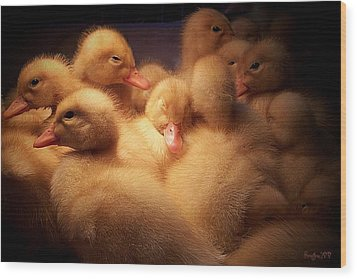 Warm And Fuzzy Wood Print by Robert Orinski