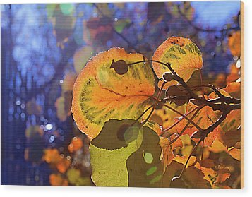 Warm Autumn Day Wood Print by Kat Besthorn