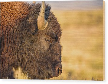 Warm Bison Wood Print