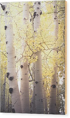Wood Print featuring the photograph Warm Gold by The Forests Edge Photography - Diane Sandoval