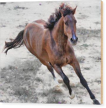 Warmblood Horse Galloping Wood Print by Vanessa Mylett