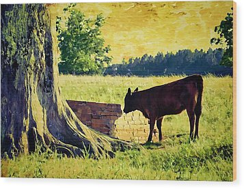 Warming Up In The Morning Glow Wood Print by Jan Amiss Photography