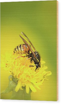 Wasp Wood Print by Jouko Mikkola