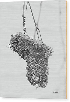 Wasp Nest Heart Wood Print