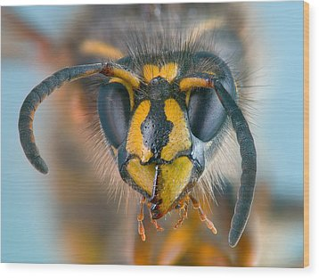 Wood Print featuring the photograph Wasp Portrait by Alexey Kljatov