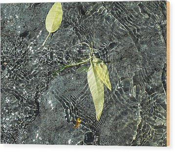 Water And Leaves Wood Print