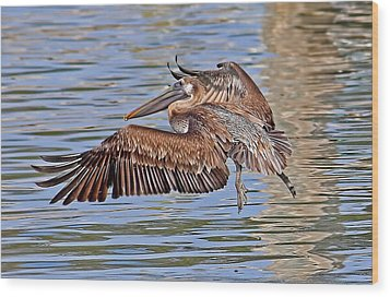 Wood Print featuring the photograph Water Ballet - Brown Pelican by HH Photography of Florida