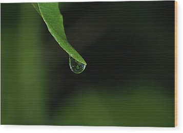 Water Drop Wood Print by Richard Rizzo