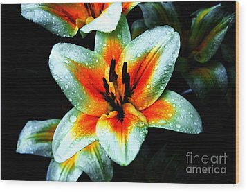 Water Droplet Covered White Lily  Wood Print by Andee Design