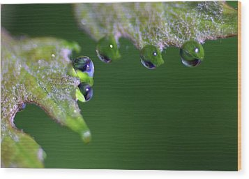 Water Droplet IIi Wood Print by Richard Rizzo