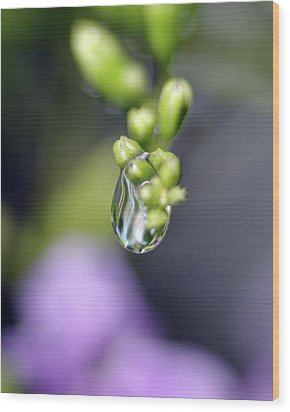 Water Droplet Iv Wood Print by Richard Rizzo