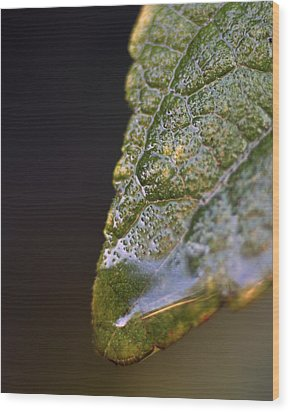 Water Droplet V Wood Print by Richard Rizzo