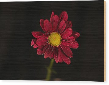 Wood Print featuring the photograph Water Drops On A Flower by Jeff Swan