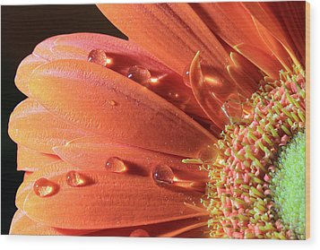 Water Drops On Colorful Flower Petals Wood Print