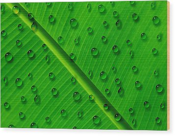 Wood Print featuring the painting Water Drops On Palm Leaf by Georgeta Blanaru