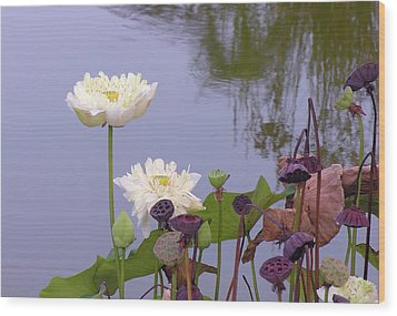 Water Flowers Wood Print by Jim Justinick