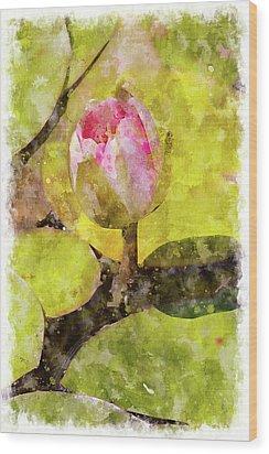 Water Hyacinth Bud Wc Wood Print by Peter J Sucy