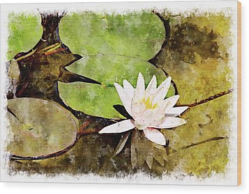 Water Hyacinth Two Wc Wood Print by Peter J Sucy