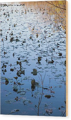 Water Lilies Autumn Song Wood Print