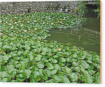 Water Lilies In The Moat Wood Print
