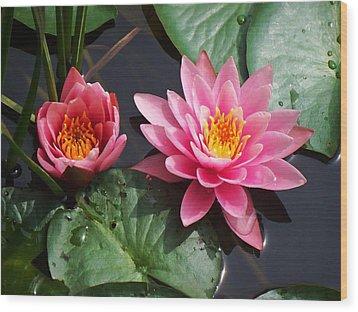 Water Lilies Wood Print by Joy Nichols