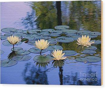 Water Lilies Wood Print by Lisa L Silva