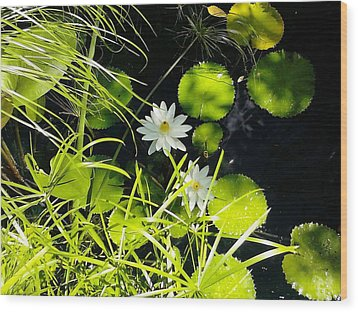 Water Lillies Wood Print by John Parry