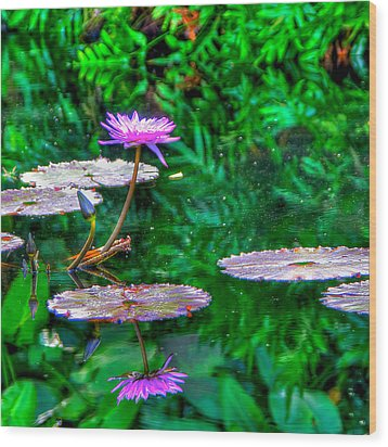Water Lilly Wood Print by William Wetmore