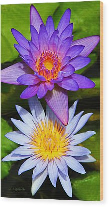 Water Lily Blossoms Wood Print by Kerri Ligatich