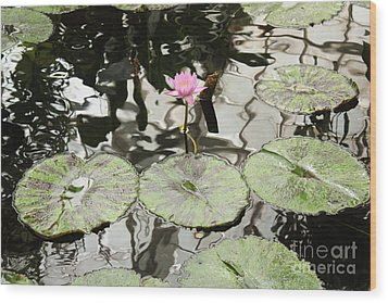 Water Lily Canvas Wood Print by Carol Groenen