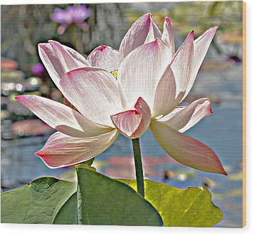 Water Lily Wood Print by Catherine Alfidi