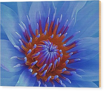Water Lily Center Wood Print