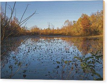 Water Lily Evening Serenade Wood Print